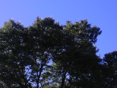 Imag0167